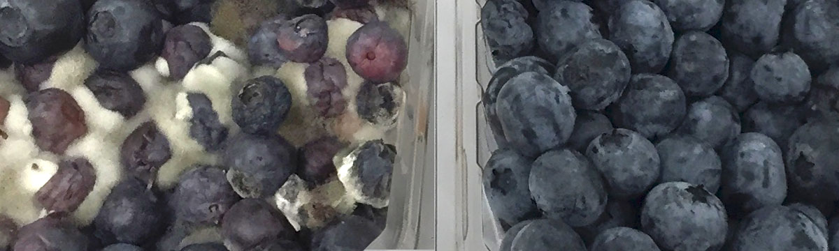 Education blueberries treatment